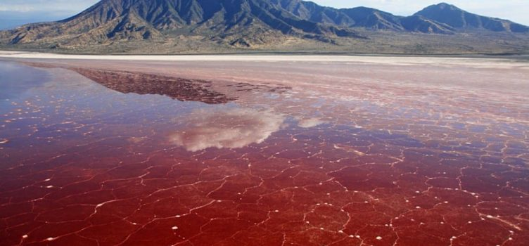 tanzania safari destinations lake natron